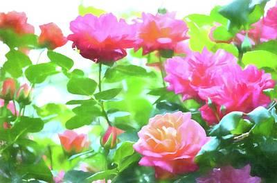 Rose 379 Poster by Pamela Cooper