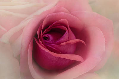 Rose Blush Poster by Terry Davis