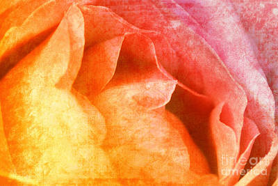 Rose  Poster by Angela Doelling AD DESIGN Photo and PhotoArt