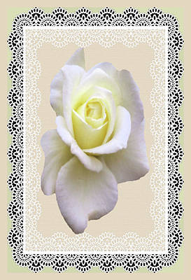 Rose In A Lace Frame Poster by Rosalie Scanlon