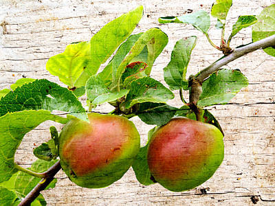 Rosy Apples Poster by Susan Tinsley