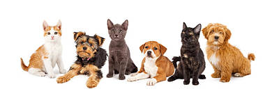 Row Of Puppies And Kittens Poster by Susan Schmitz