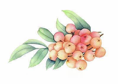 Rowan Berries Poster by Taylan Soyturk