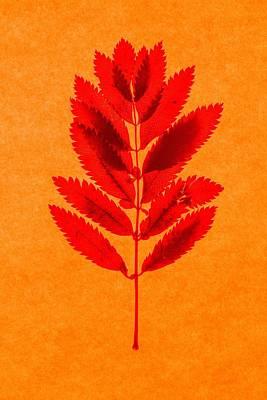 Rowan Leaves Poster by Graeme Harris