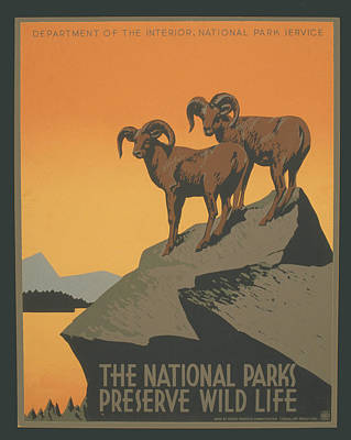 Rreserve Wildlife Poster by Unknown