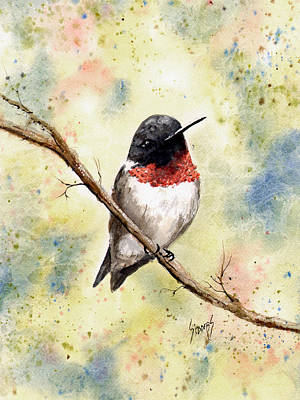 Ruby Throated Hummingbird Poster by Sam Sidders