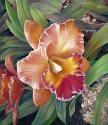 Ruffled Peach Cattleya Orchid Poster by Nancy Tilles