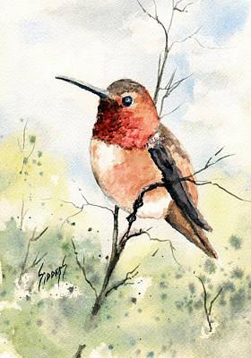 Rufous Hummingbird Poster by Sam Sidders