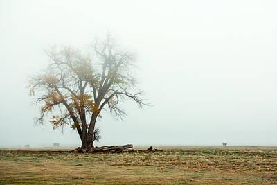 Rural Pasture And Tree Poster by Todd Klassy