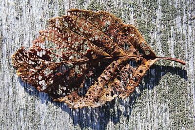 Rustic Leaf Poster by Judy Bernier
