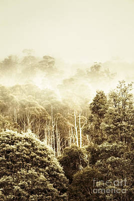 Rustic Tasmanian Rural Forest Poster by Jorgo Photography - Wall Art Gallery