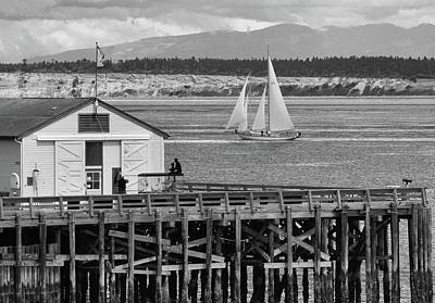 Sailing At Neah Bay Black And White Poster by Dan Sproul