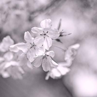 Sakura I Poster by Jon Woodhams