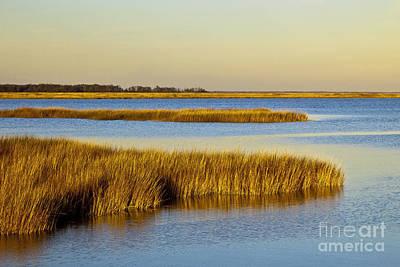 Salt Marsh In Delaware Poster by Michael P. Gadomski