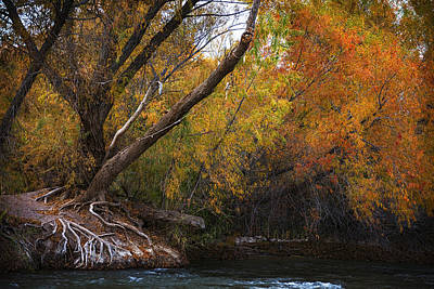 Salt River Under Brilliant Fall Colors Poster by Dave Dilli
