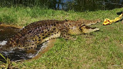 Saltwater Crocodile 8 Poster by Gary Crockett
