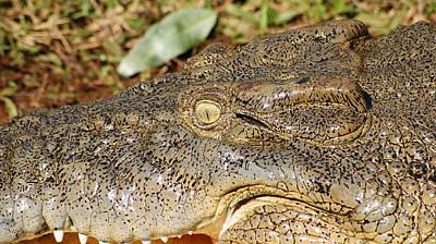 Saltwater Crocodile Eye Poster by Gary Crockett