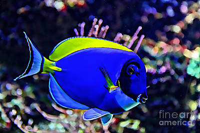 Saltwater Fish Blue Tang Poster by Marvin Blaine