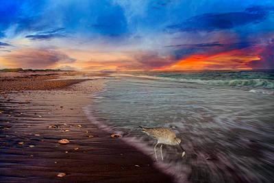 Sandpiper Sunrise Poster by Betsy C Knapp