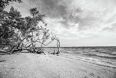 Sanibel Island Morning Poster by Scott Pellegrin