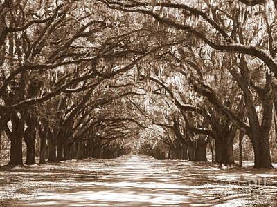 Savannah Sepia - Glorious Oaks Poster by Carol Groenen