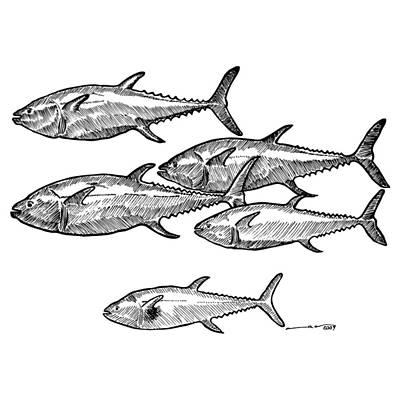 School Of Tuna Fish Poster by Karl Addison