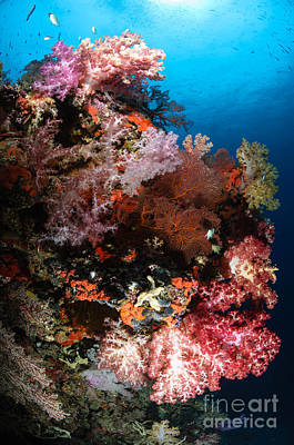 Sea Fans And Soft Coral, Fiji Poster by Todd Winner