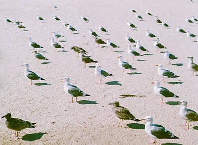 Seagulls  Poster by Ariane Moshayedi