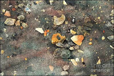 Seashells And Stones Poster by Kathleen Struckle