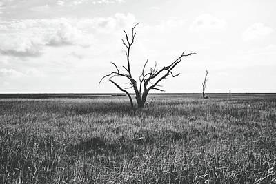 Sentinel Of The Marsh Poster by Scott Pellegrin