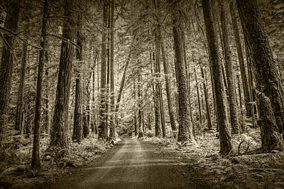 Sepia Tone Of A Road In A Rain Forest Poster by Randall Nyhof