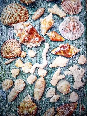 She Sells Sea Shells... Poster by Barbara Chichester