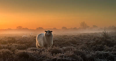 Sheep In The Mist Poster by Rijko Ebens
