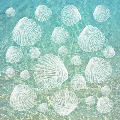 Shells And Clear Water Poster by Lena Photo Art