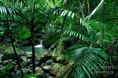 Sierra Palms Waterfall El Yunque Poster by Thomas R Fletcher