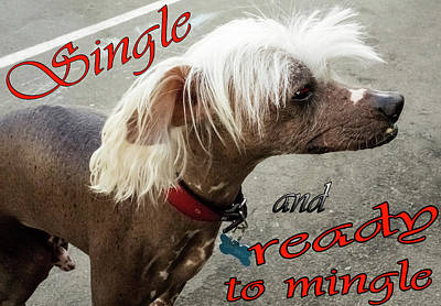 Single And Ready To Mingle Poster by Ivanoel Art