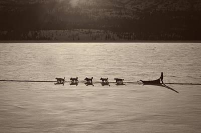 Sledding Through Denali Poster by Mountain Dreams