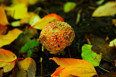 Small Mushroom In Autumn Poster by Jeff Swan