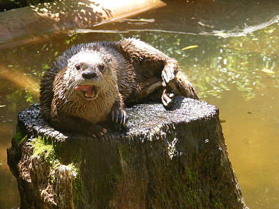 Smiling Otter Poster by Elena Tudor