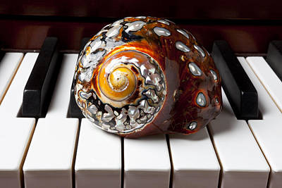 Snail Shell On Keys Poster by Garry Gay