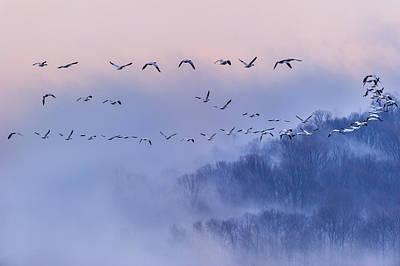 Snow Geese Poster by Austin Li