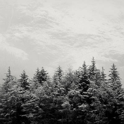 Snowcapped Firs Poster by Dave Bowman
