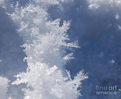Snowflakes Poster by Sharon Elliott