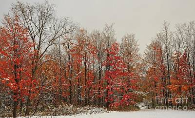 Snowing In Autumn Forest Poster by Terri Gostola