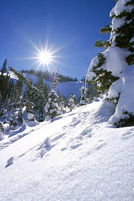 Snowscape With Bright Sun Poster by American School