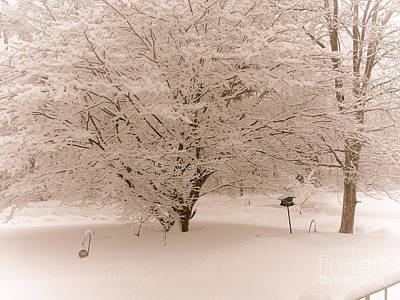Snowy Japanese Maple Tree Poster by Claudia M Photography