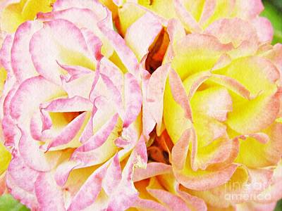 Soft Pink And Yellow Roses Poster by Sarah Loft