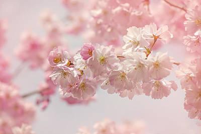 Soft Pink Spring Poster by Jacky Parker