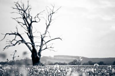 Solemn Oak Poster by Justin Albrecht
