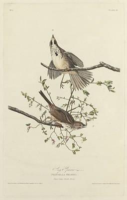 Song Sparrow Poster by John James Audubon
